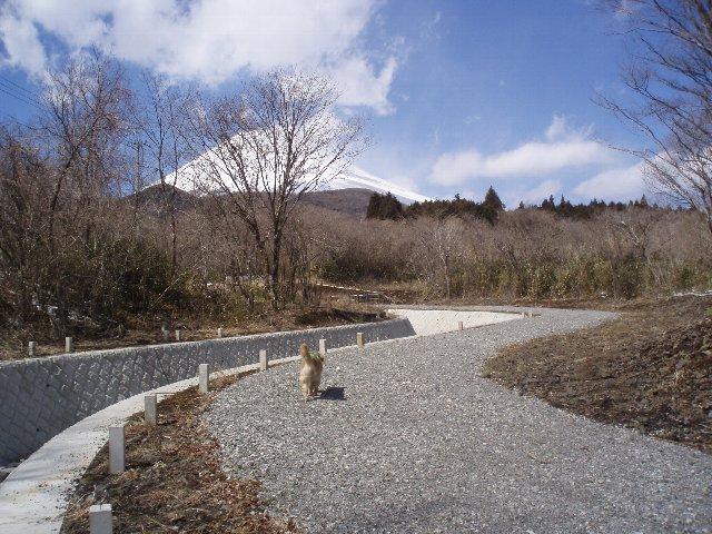 3月26日富士山須山口登山歩道 120