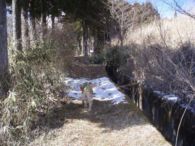 3月26日富士山須山口登山歩道 124