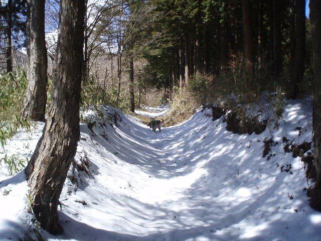3月26日富士山須山口登山歩道 125