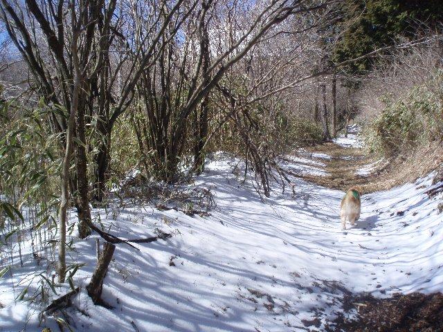 3月26日富士山須山口登山歩道 126