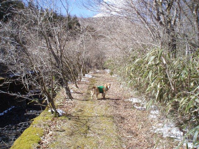 3月26日富士山須山口登山歩道 133