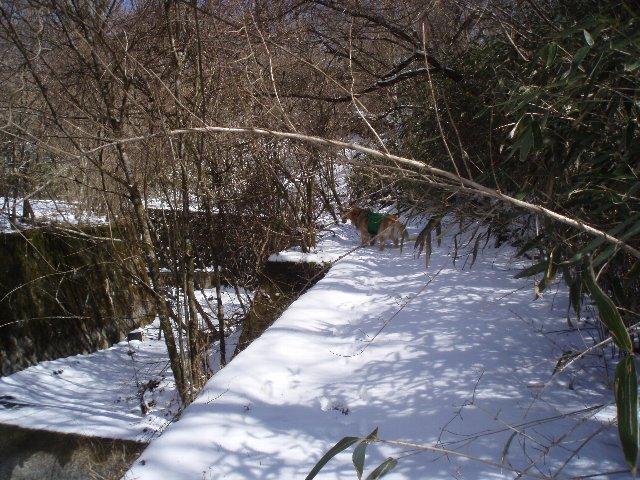 3月26日富士山須山口登山歩道 135