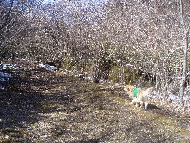 3月26日富士山須山口登山歩道 148
