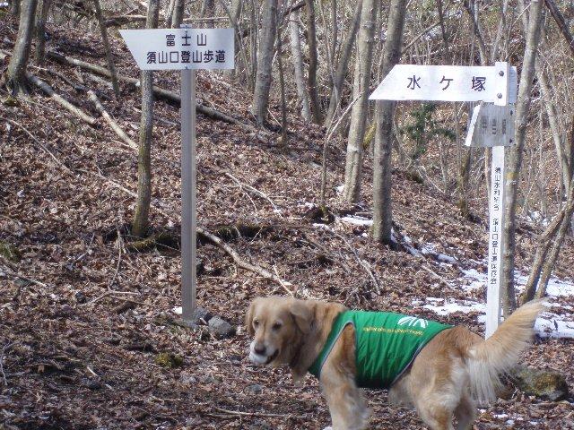 3月26日富士山須山口登山歩道 155