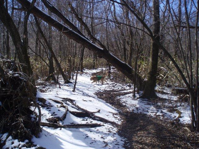 3月26日富士山須山口登山歩道 159
