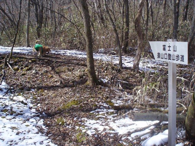 3月26日富士山須山口登山歩道 167