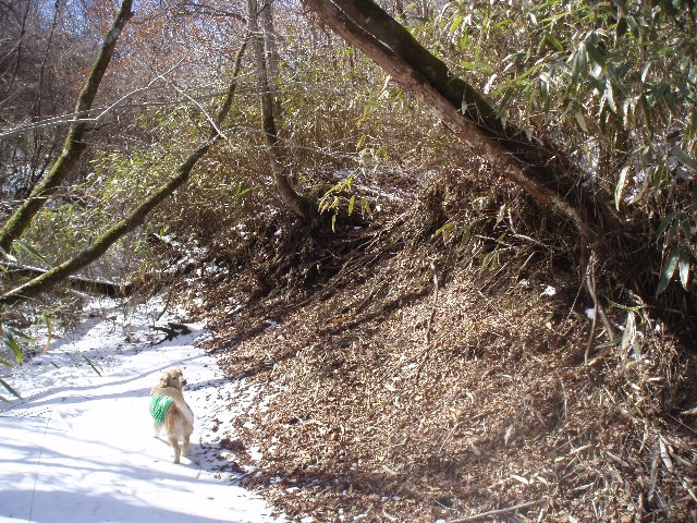 3月26日富士山須山口登山歩道 170