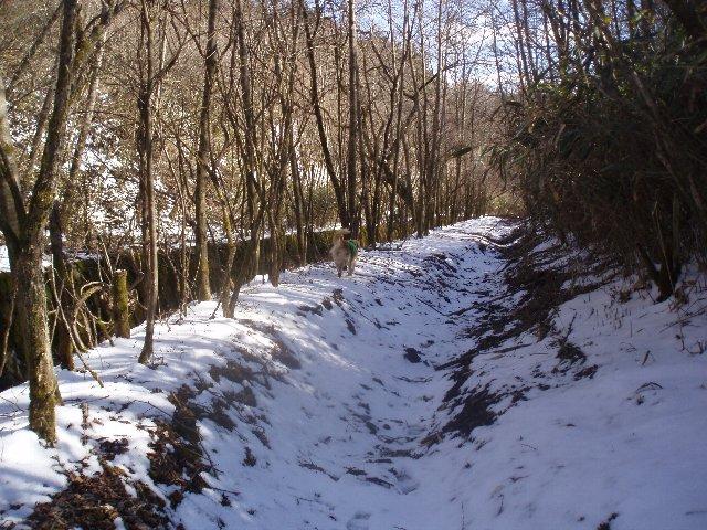 3月26日富士山須山口登山歩道 185