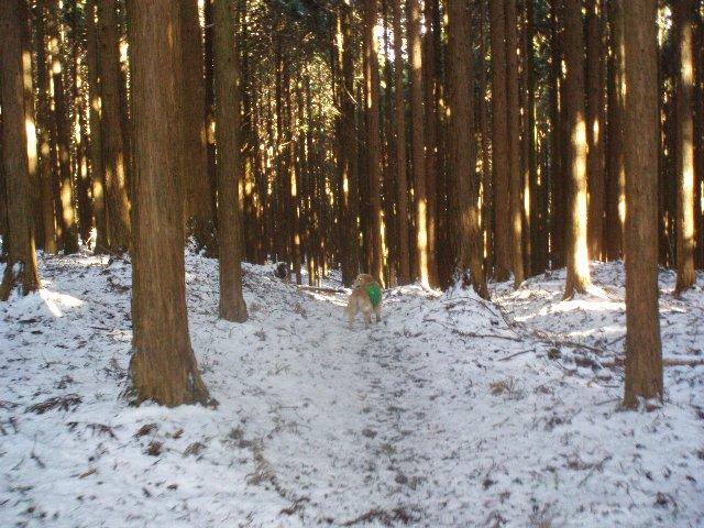 3月26日富士山須山口登山歩道 192