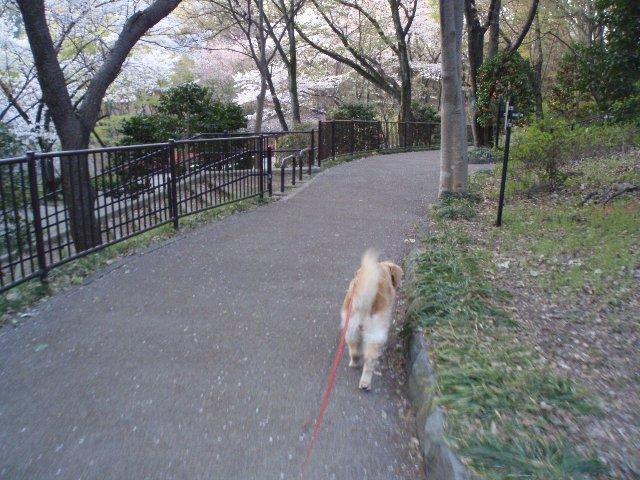 犬・子宮蓄膿症 011