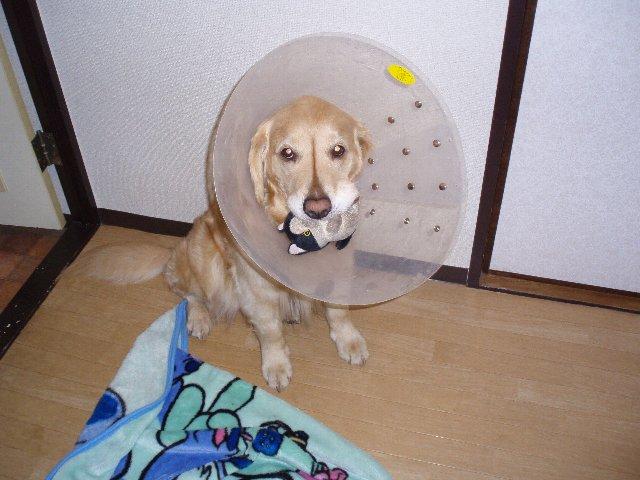 犬・子宮蓄膿症 072