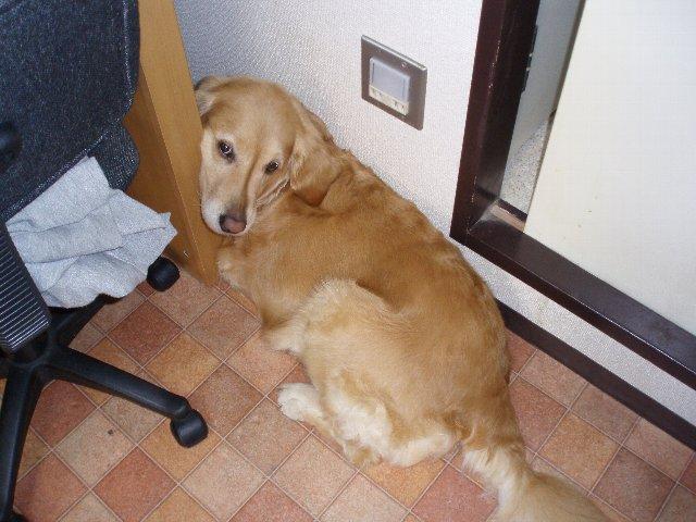 犬・子宮蓄膿症 077