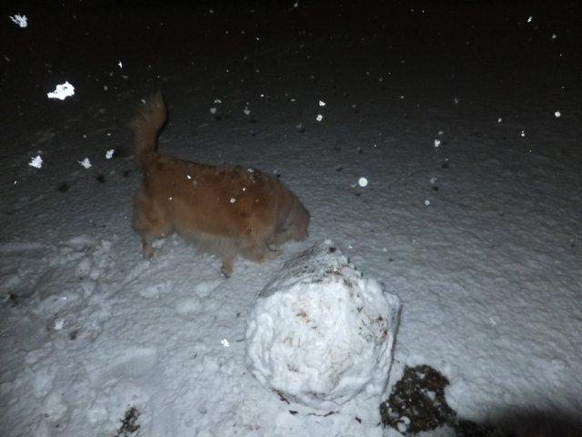 2012.1.23東高根森林公園 雪