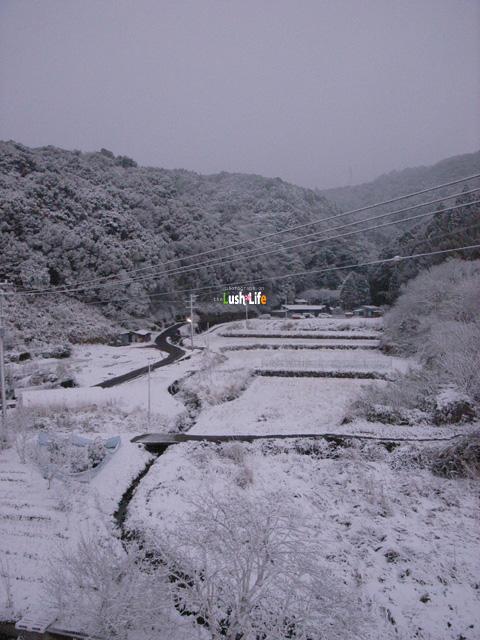 20100113d.jpg