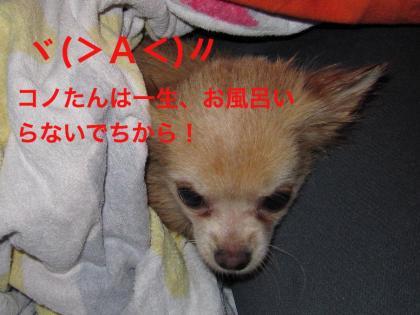 IMG_2725_convert_20100410091501.jpg
