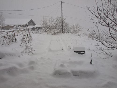 午後の雪1