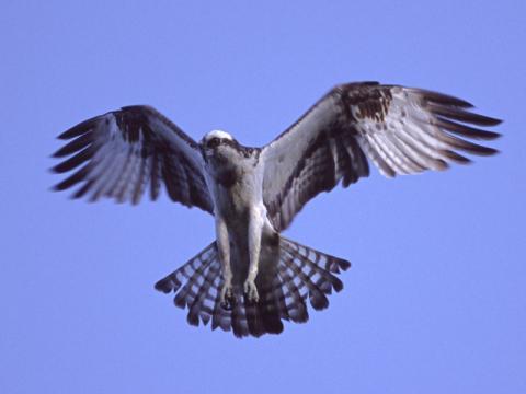 マンションから見えた鳥