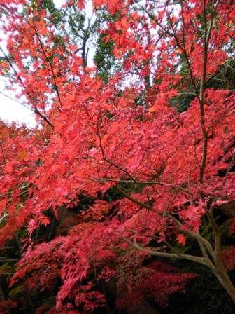 2010年11月30日宗像の鎮国寺で紅葉狩り