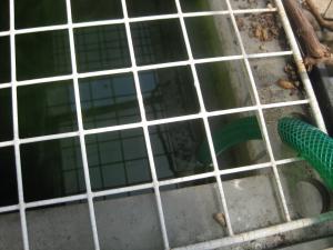 緑というか黒い水