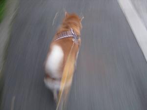 ものすご早く走ってるように見える