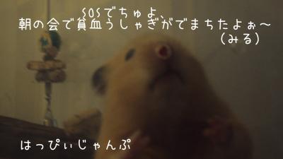 DSC00171_convert_20110519092836.jpg
