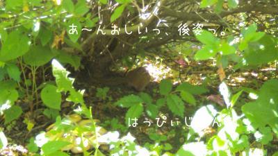 DSC01184_convert_20110605073136.jpg
