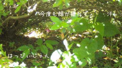 DSC01185_convert_20110605073151.jpg