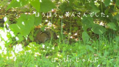 DSC01186_convert_20110605073209.jpg