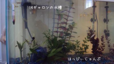 DSC03123_convert_20110708193746.jpg