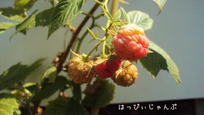 DSC03793_convert_20110718194748.jpg