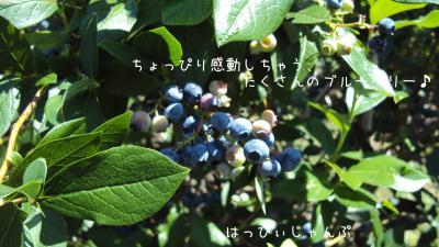 DSC04445_convert_20110802203434.jpg