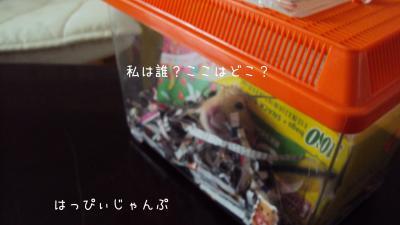 DSC04612_convert_20110803194850.jpg
