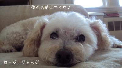 DSC05762_convert_20110818211625.jpg