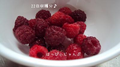 DSC08351_convert_20110924232756.jpg