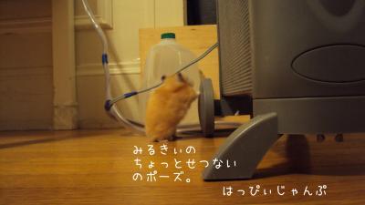 DSC09112_convert_20111015012732.jpg