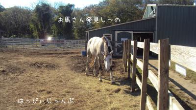 DSC09150_convert_20111010094609.jpg
