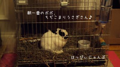 DSC09439_convert_20111022022033.jpg