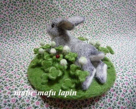 羊毛P1020246