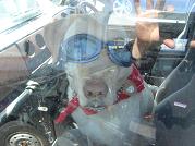 ゴーグル犬2115