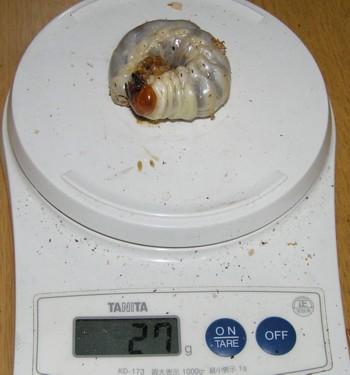 P2010188.jpg