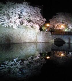 kensakura.jpg