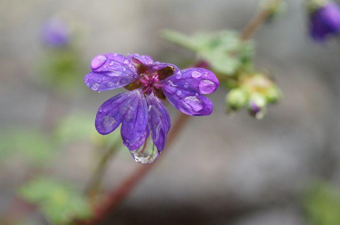 冷たい雨が 4