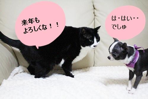 トリミング♪ (4)