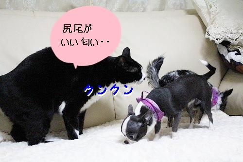 トリミング♪ (6)
