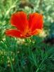 Flower1-001 hhh