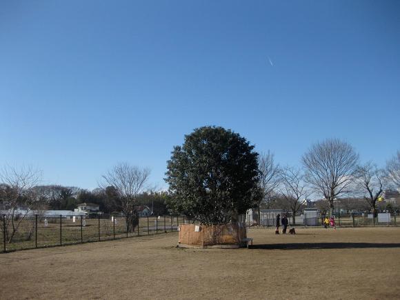 20110106-036.jpg