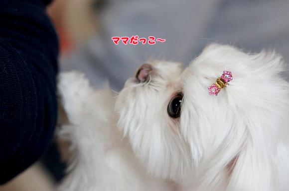 s_DSC08438seiko.jpg