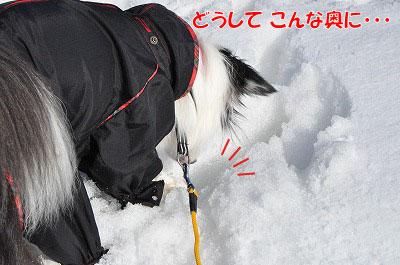 201102-yubo3.jpg