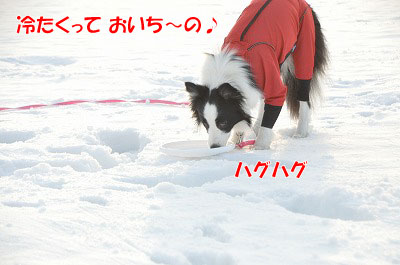 20110211-6.jpg