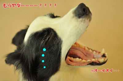 20120319-ken02.jpg